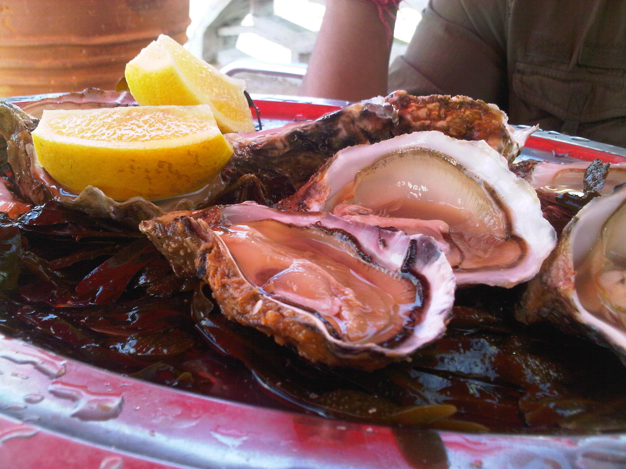 Some of the world's best oysters are found in Oalidia (Image © Priya Bala/Folomojo)