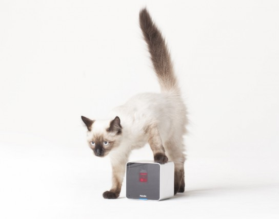 Petcube_Camera-Siamese