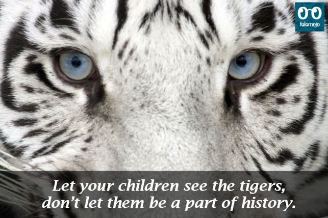 World Tiger Day: 10 inspirational slogans aimed to save these wild