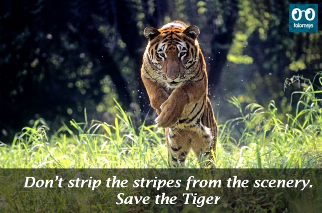 Poster On Save Wildlife With Slogan Sketch