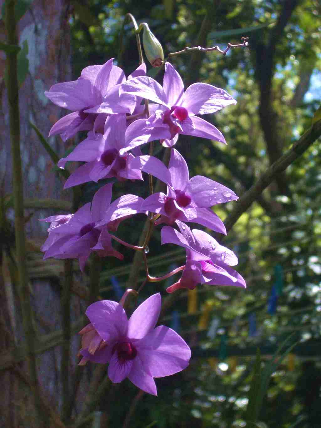 Orchids in Simlipal Reserve Forest. Pic Source: Wikipedia