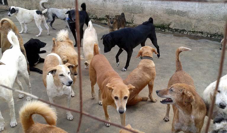 Картинки по запросу Эта женщина из Южной Кореи заботится о 200 собаках, которых она спасла от гибели