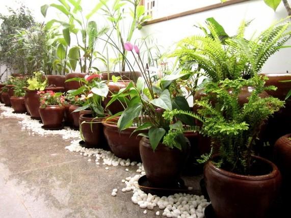 Image Credit:mysunnybalcony.com